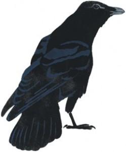raven=change