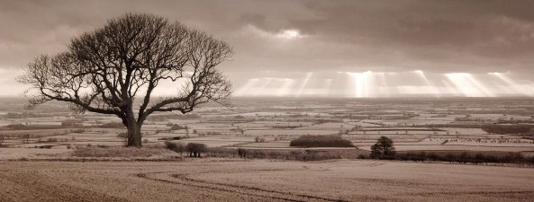 An Empty Tree from Garrowby Hill by tricky ™ on flickr